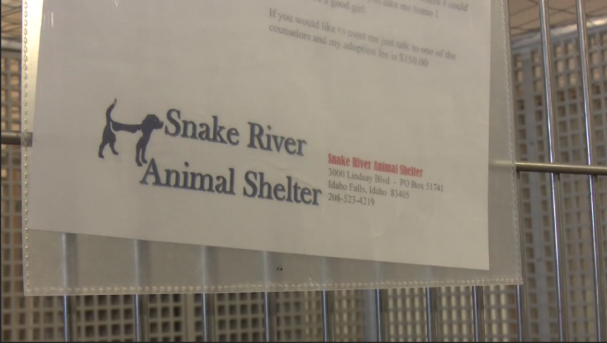 snake-river-animal-shelter-prepares-for-increase-in-surrendered-pets