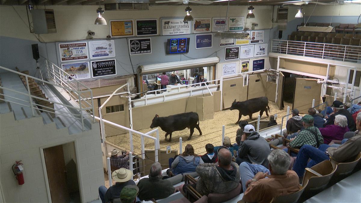 Blackfoot Livestock Auction