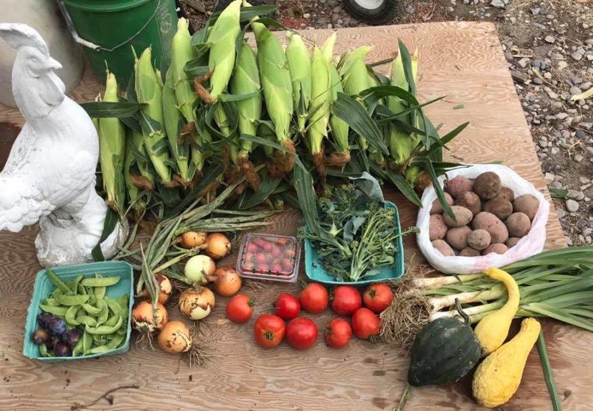 swore farms csa produce