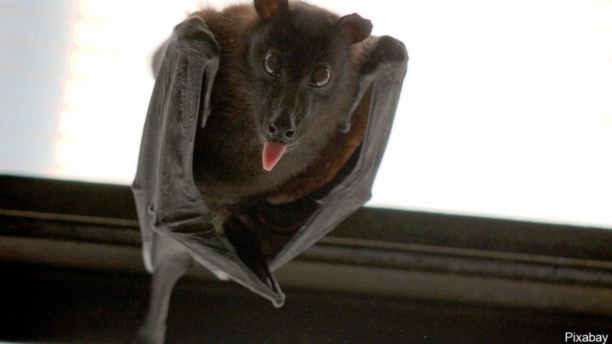 bat logo_9121