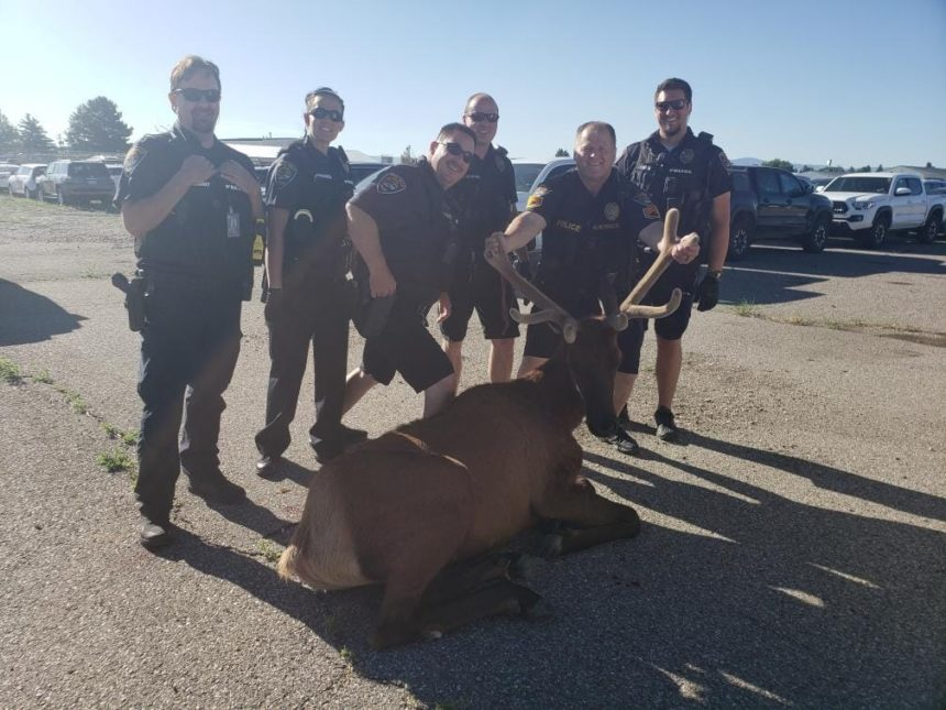ifpd with elk