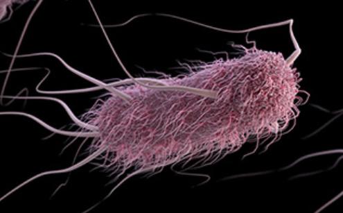 e-coli cdc