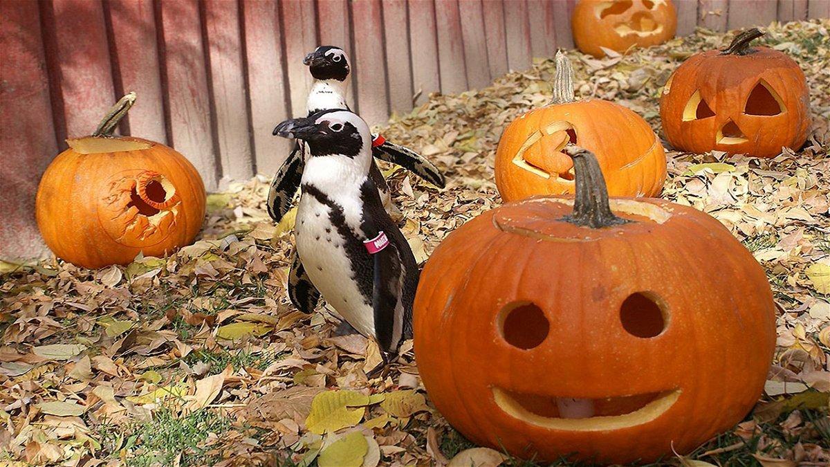 Halloween 2020 Idaho Falls Idaho Falls Zoo goes to fall hours   Local News 8