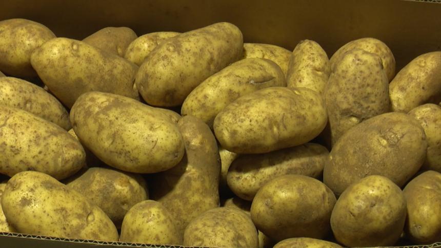Potato harvest logo image_0399292