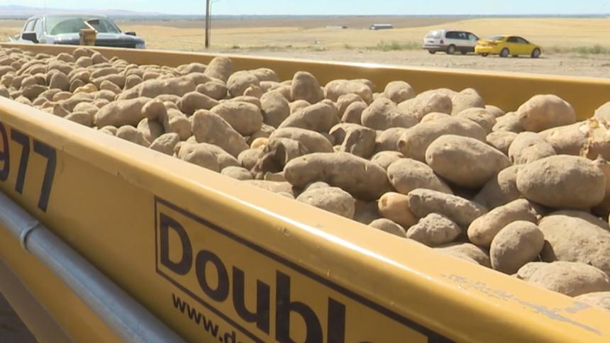 Potato harvest outside logo image