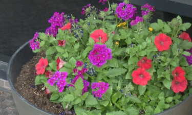 Flowers in Historic Downtown Pocatello