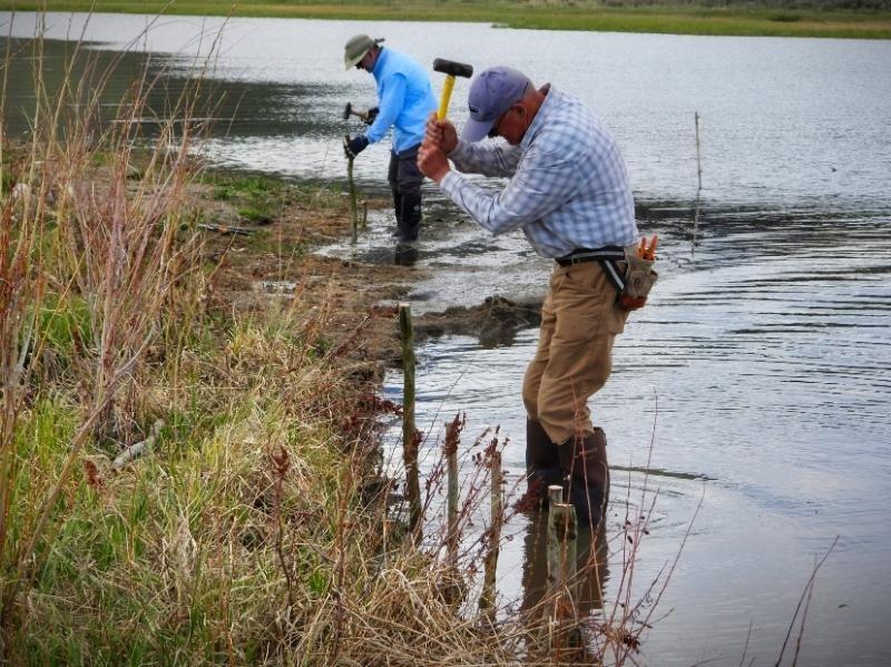 Collaborative efforts result in restoration of Henrys Lake shoreline6