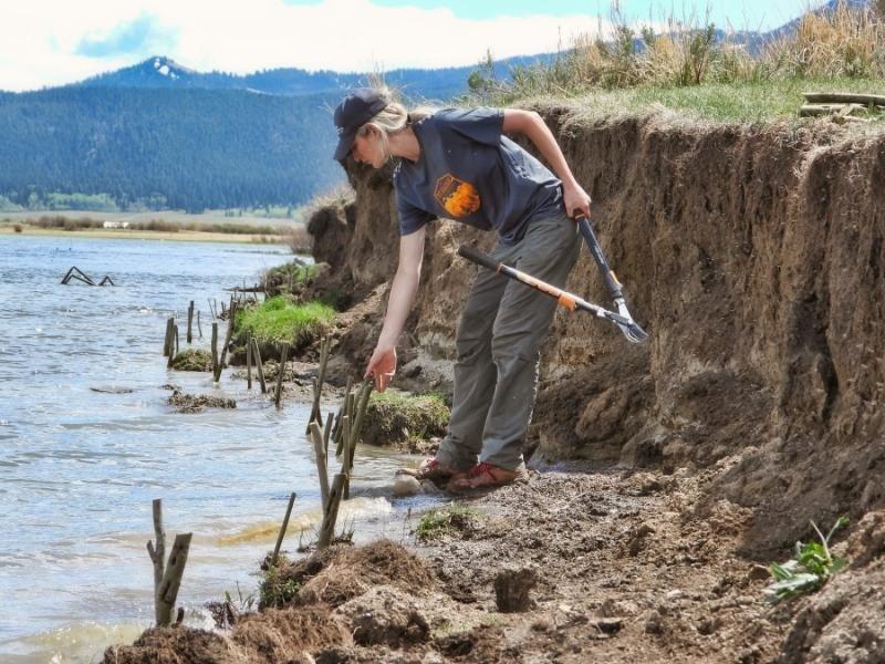 Collaborative efforts result in restoration of Henrys Lake shoreline7