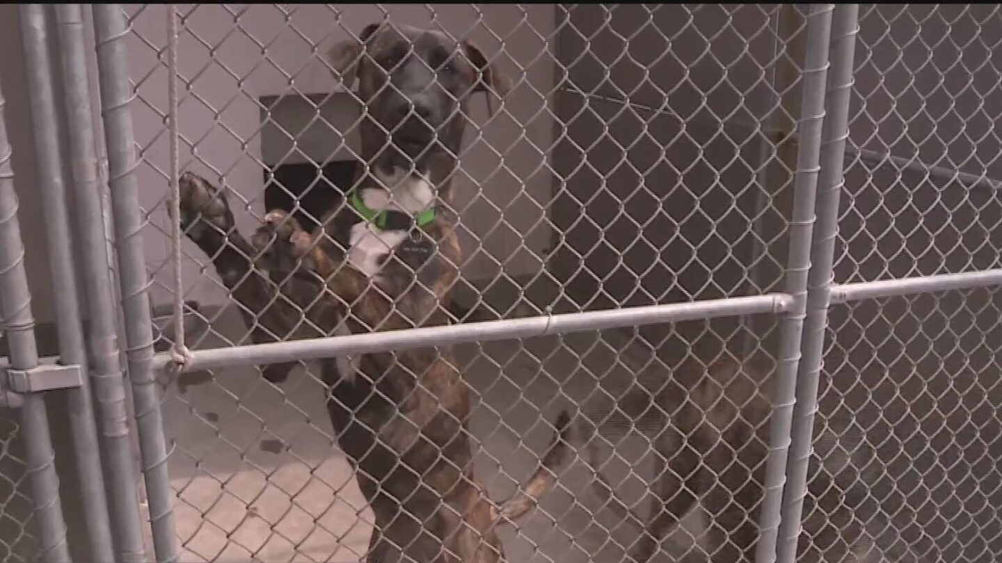 <i>KOVR</i><br/>Animal shelters are being overwhelmed by the number of animals they're taking in.
