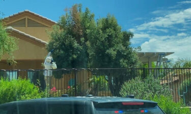 An open beehive was found in a tree after a bee swarm attack in Arizona.