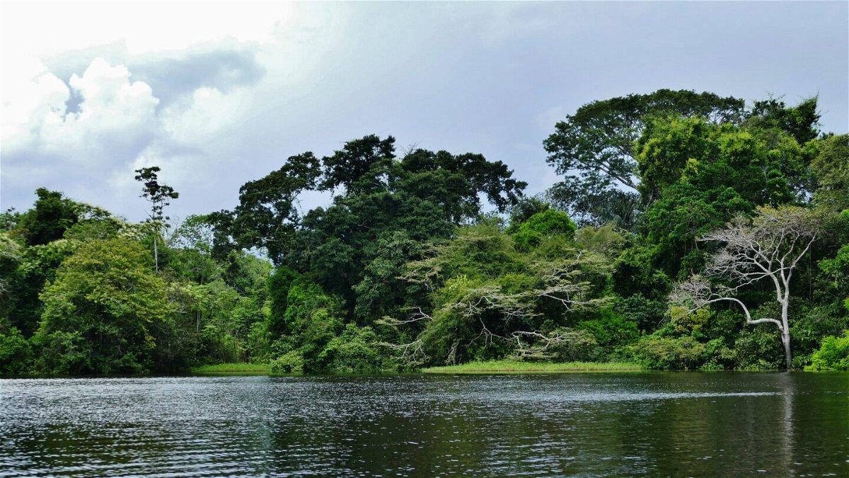 <i>Courtesy Sergio León-Ecodestinos</i><br/>The waters of the Lagos de Tarapoto are an important habitat for many animal species.