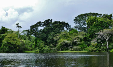 The waters of the Lagos de Tarapoto are an important habitat for many animal species.
