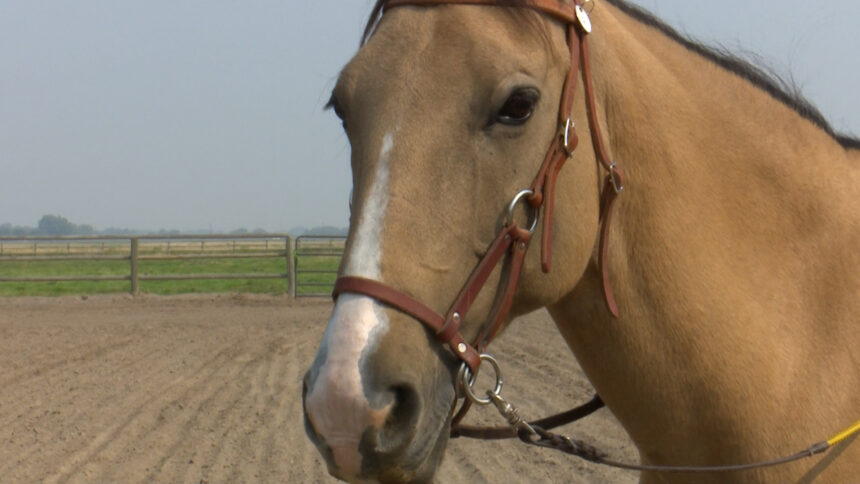 Horse from Unbridled Hope