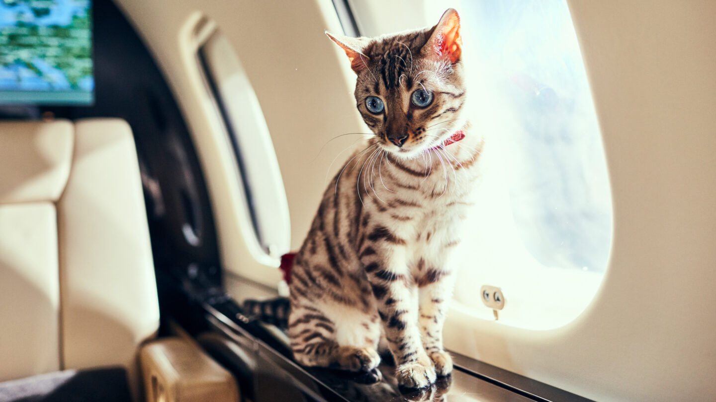 <i>Courtesy VistaJet</i><br/>More and more travelers are taking their pets with them on board private jets.