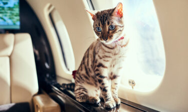 More and more travelers are taking their pets with them on board private jets.