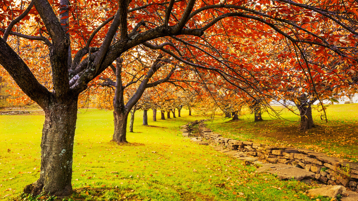 <i>Shutterstock</i><br/>Autumn in Hurd Park