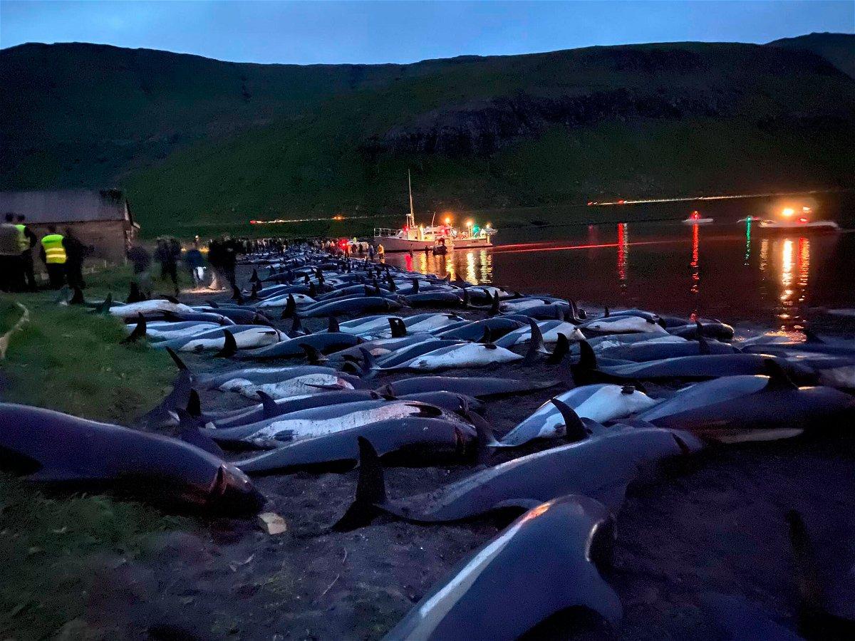<i>Sea Shepherd/AP</i><br/>More than 1