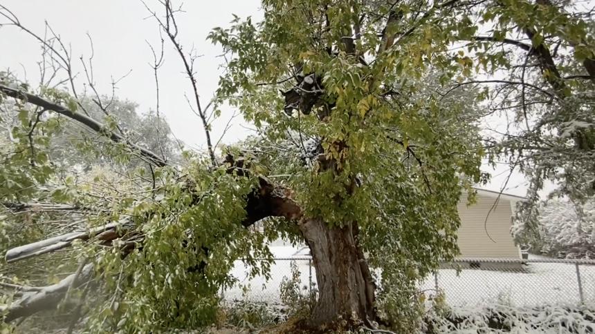 Snow causes damage across eastern Idaho Oct 12_6